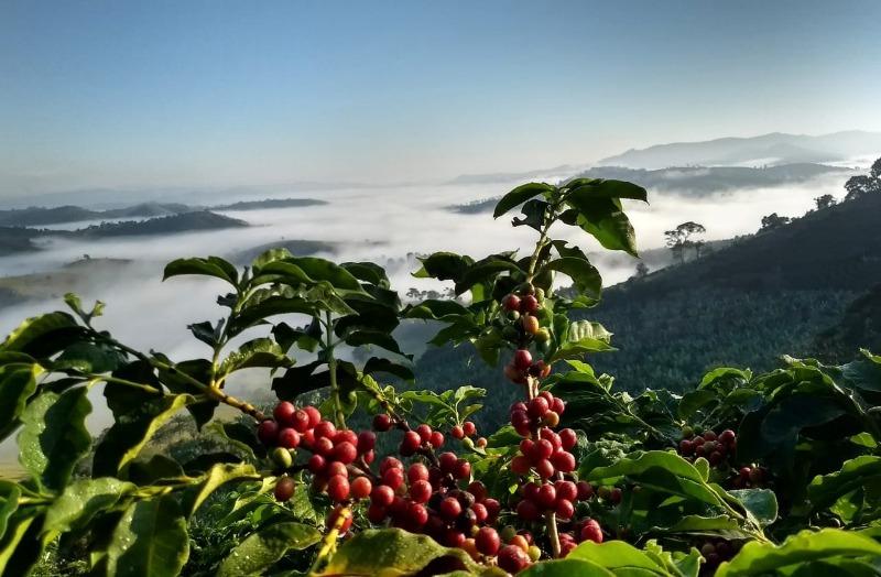 RPPnistas apresentam produção de café sustentável