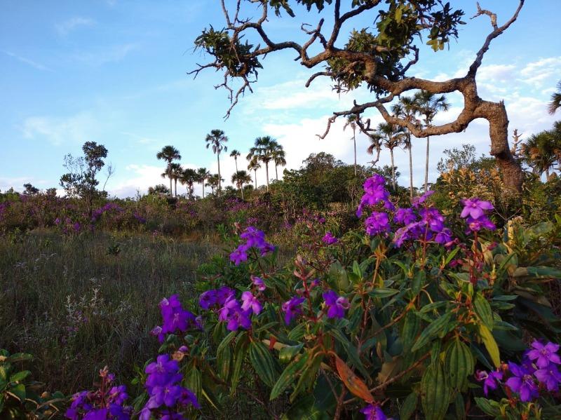 Pirenópolis ganha mais duas RPPNs com apoio do Projeto 'Reservas Privadas do Cerrado'