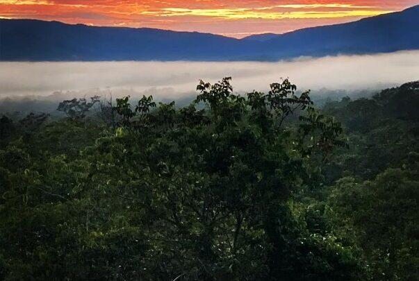 Projeto Reservas Privadas comemora criação de RPPN Bacupari, no Cerrado