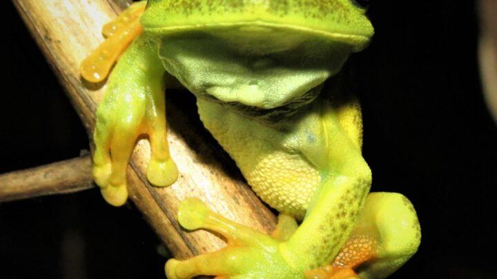 RPPNs do Cerrado ajudam na identificação de espécies ameaçadas